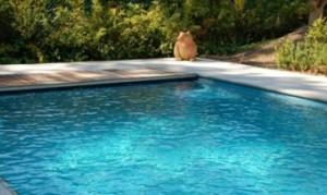 nieuwatlantis zwembaden